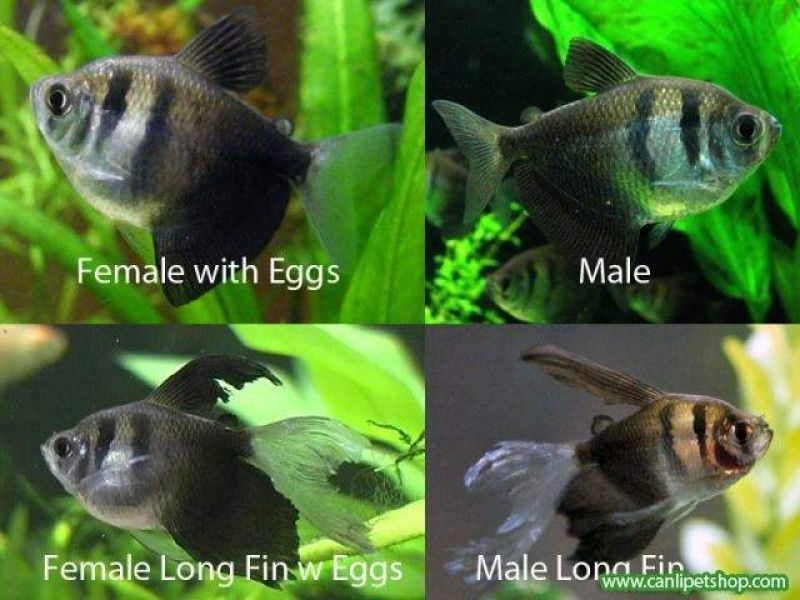 Free dating site called fish