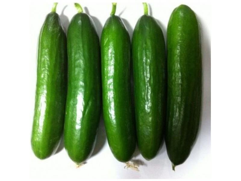 Beith Alpha Hıyar (Salatalık) Tohumu - 300 adet