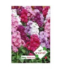 Şebboy Çiçeği Tohumu 50 Adet