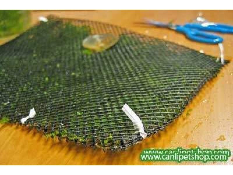 Tel Yeşil (Moss Ve Riccia için) 10x10cm2