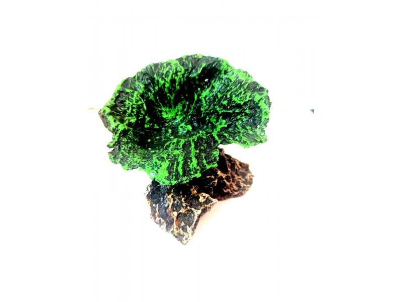 Yapay Mercan Dekor Mushroom (yeşil)  12 cm x 13 cm