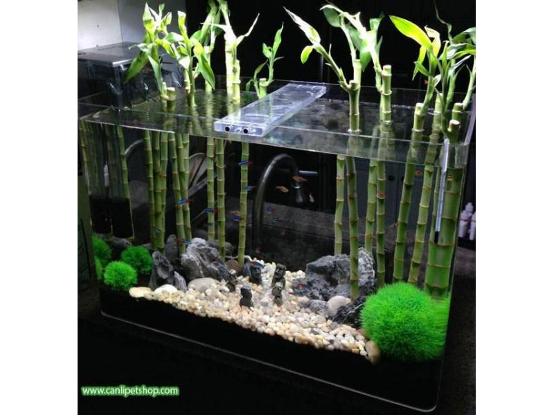 Bambu Kamışı 15-20 Cm