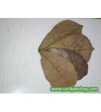 Y-Catappa Yaprağı Su düzenleyici ve Karides Yemi