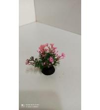 Plastik Bitki 5 cm Hemianthus  Pembe