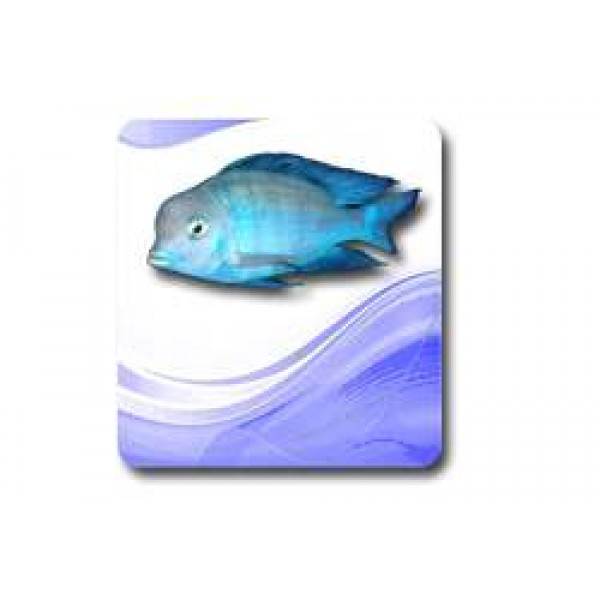 Balık Çeşitleri