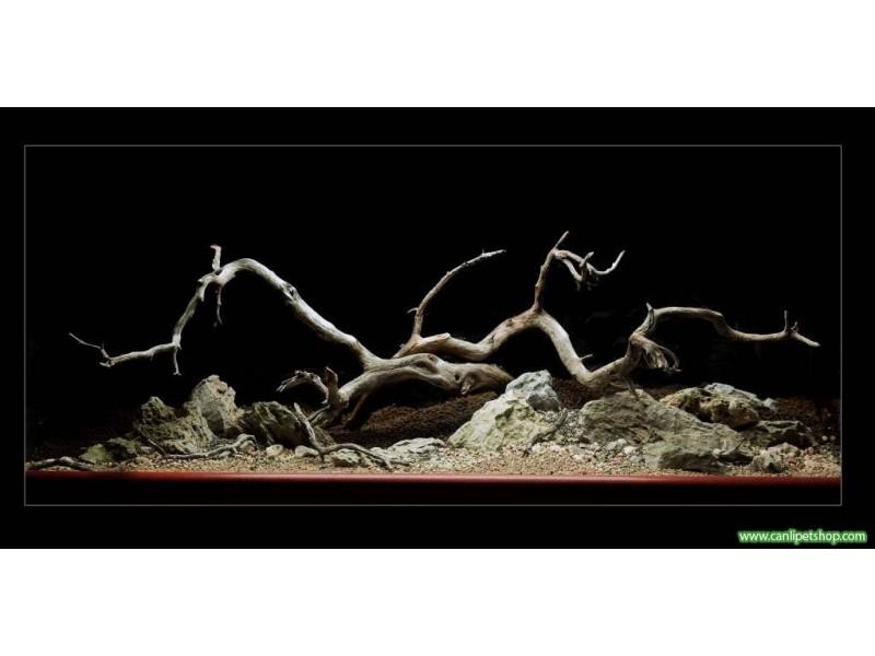 Manzanita Driftwood  Büyük Boy