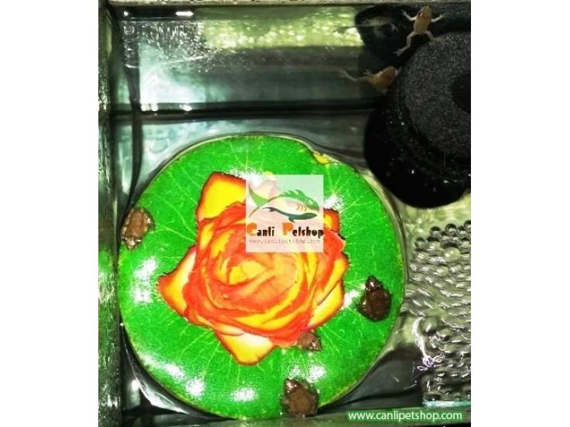 Kurbağa Minyatür Akvaryum Kurbağası 1 Adet