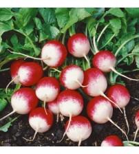 Kırmızı Beyaz Fındık Turp Tohumu -1000 adet