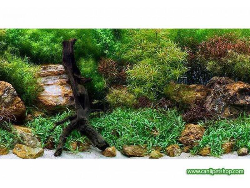 Arka Fon 10 cm (Su Bahçesi) Yükseklik 60 Cm