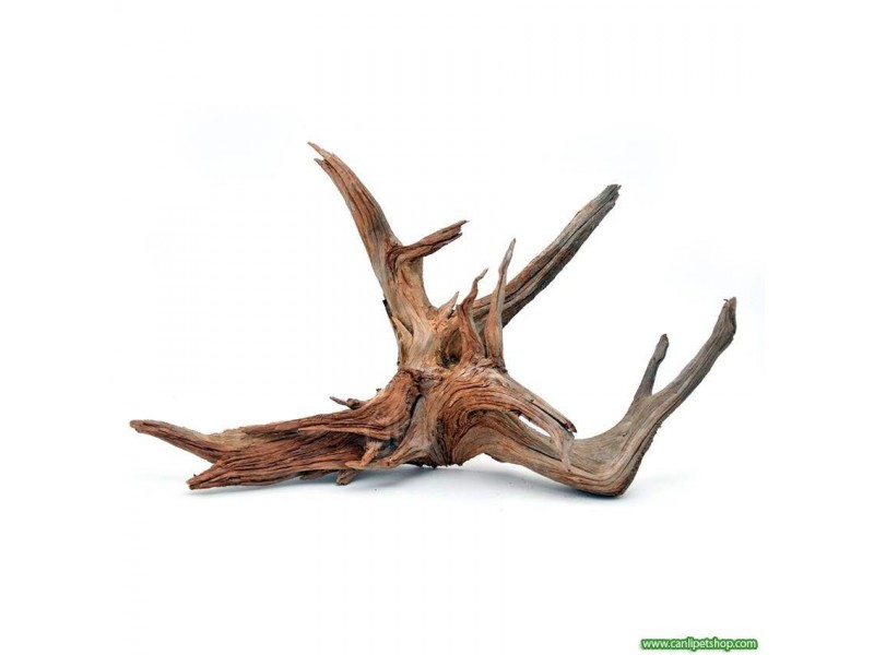 Yati  Kökü (Red Moor Wood )- S - 20-25 Cm